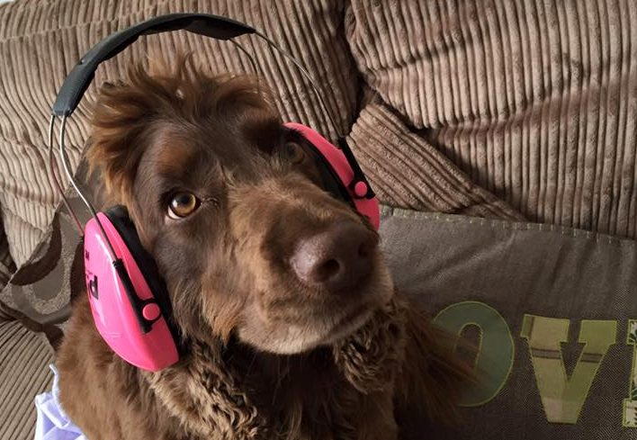 Lord Bentley Ear Defenders