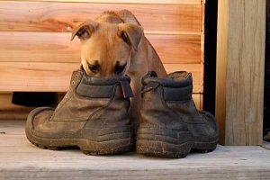 dog-smelling-