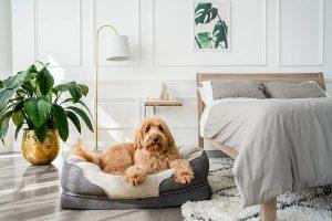 BarksBar Large Gray Orthopedic Dog Bed - waterproof dog beds