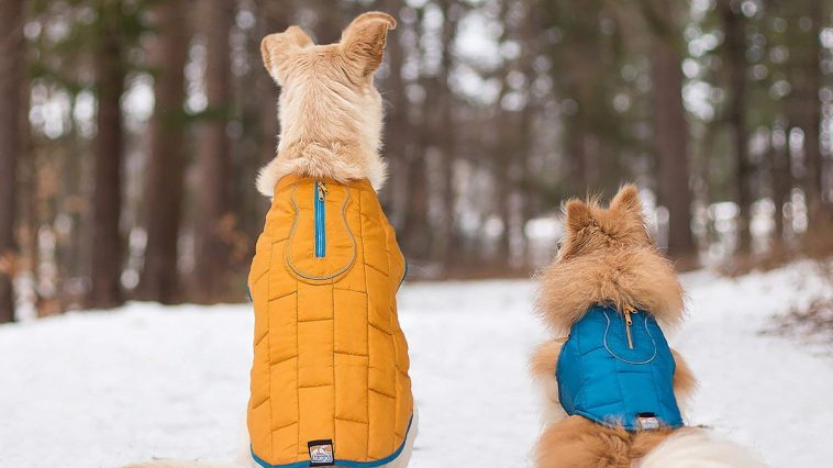 Best Dog Coats