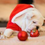 Dog Advent Calendar