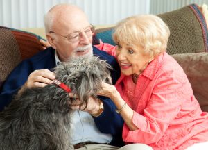 Dogs good for old people