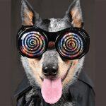 Dog-hypnosis