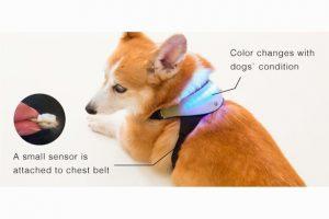 inupathy-collar