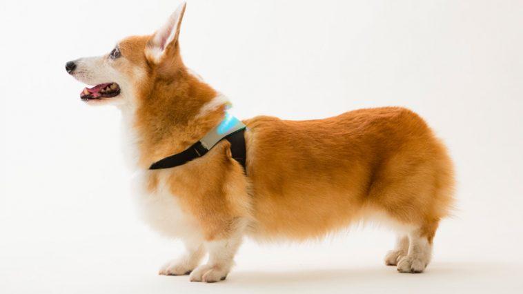Inupathy Smart Collar