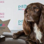 Pet Survivor award darcy