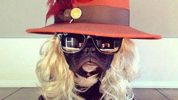 dogs-of-instragram
