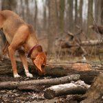 dog-seasonal-canine-illness
