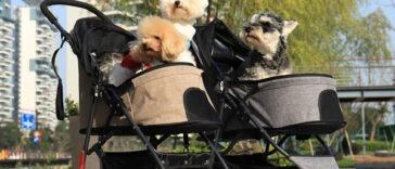 dog prams